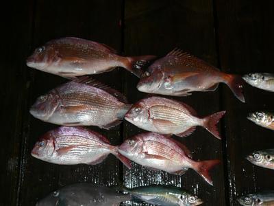 2008年8月12日(火)若狭湾は冠島手前で半夜釣りの釣果