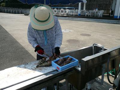 2008年9月11日(木)釣った魚を調理されていました!