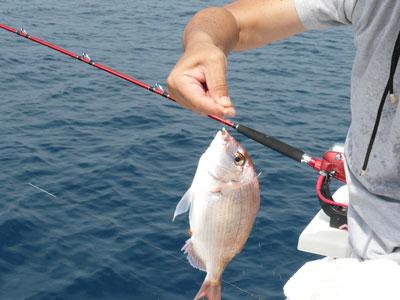 2008年9月17日(水)塩焼きサイズのチダイ