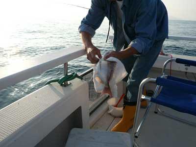 2008年10月8日(水)ウマズラの層を抜ければ良型のタイが釣れています