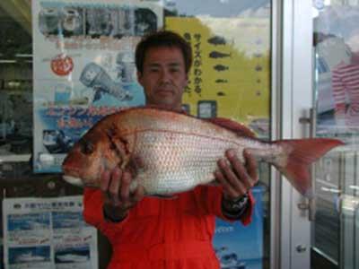 2008年11月1日(土)マリーナより出船されマダイの69cmを釣られました