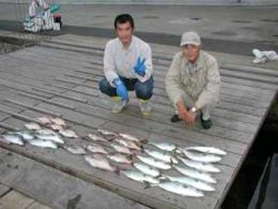 2009年6月2日(火)ハマチの43cmを釣られました
