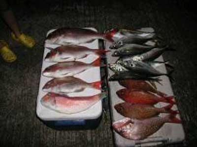 2009年8月12日(水)鯛・鯵を釣られました