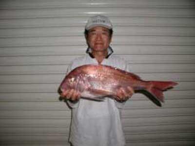 2009年9月6日(日)鯛の55cmを釣られました