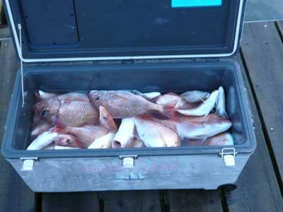2009年9月24日(木)クーラーBOXの釣果を見せてもらいました