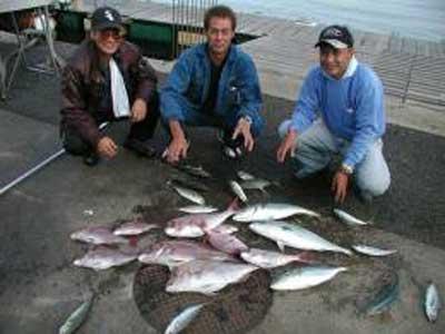 2009年11月8日(日)鯛とハマチを釣られました