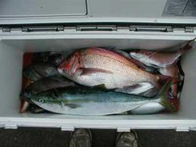 2010年4月19日(月)鯛やハマチを釣られました