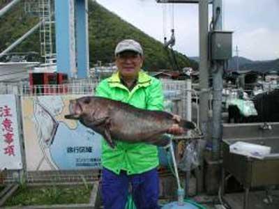2010年4月30日(金)クエの75cmを釣られました