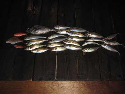 2010年5月5日(水)釣果の写真はアジを中心に「魚の形」になっていました