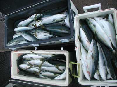 2011年2月2日(水)マリーナスタッフ釣果