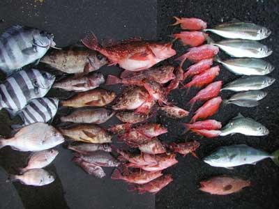 2011年2月5日(土)若狭湾で鯵やメバルを釣られました