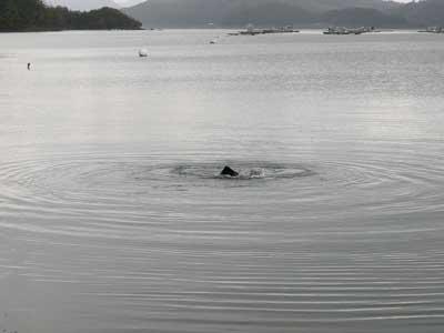 何かツノの様なモノが海面より出てきました