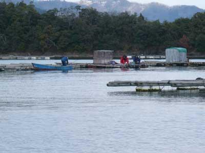 2009年1月25日(日)舞鶴は吉田の筏で釣りを楽しまれている様子(3枚目)