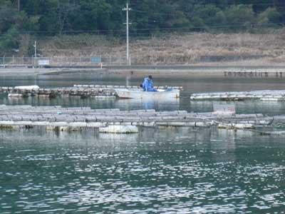 2009年1月25日(日)舞鶴は吉田の筏で釣りを楽しまれている様子(4枚目)