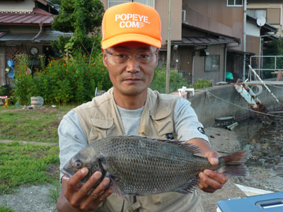 2008年9月9日(火)舞鶴は吉田の筏で46cmサイズのチヌが上がった