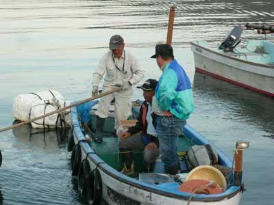 2008年9月9日(火)舞鶴は吉田の筏より夕刻に帰港されました