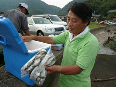 2008年9月13日(土)舞鶴は吉田の筏で釣れたアジです