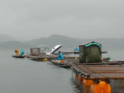 2008年9月21日(土)舞鶴は吉田の筏は雨模様です