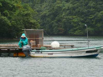 2008年9月20日(土)舞鶴は吉田の筏でよしみ船頭さんもチヌ釣り?