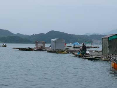 2008年11月3日(月)手前が國丸渡船のお客さんと奥手によしみ渡船のお客さん