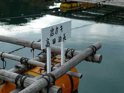 2008年11月9日(日)岩牡蠣の筏を示す看板を2ケ所に取り付けました