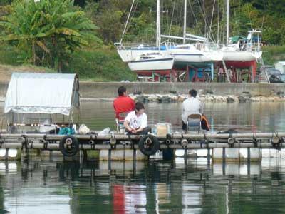 2008年11月9日(日)筏より向かって北側のお客さん2枚目です