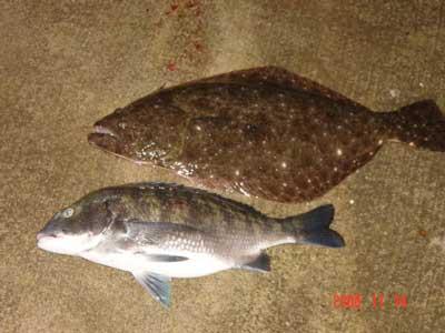 2008年11月14日(金)國丸船頭さんが測られた40cmのチヌと54cmのヒラメです