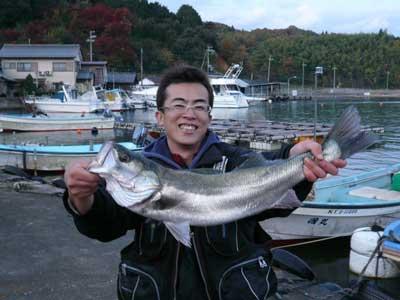 2008年11月23日(日)佐々木様が釣られたスズキは自己最高の72.0cmです