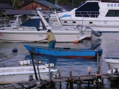 2008年11月29日(土)舞鶴は吉田の筏よりカセ釣りで夕刻に帰港です