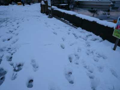 2009年1月11日(日)昼間は天気も良くなり夕刻には溶けて約10cmくらいです
