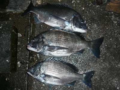 2009年1月18日(日)1匹は小さくて放流される予定で良型の3匹を出して頂きました