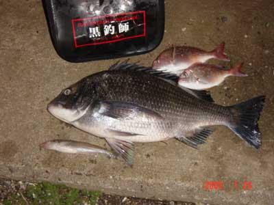 2009年1月24日(土)國丸渡船のお客さんは年無し50.5cmのチヌです