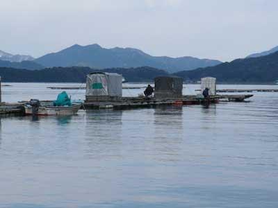 2009年1月25日(日)舞鶴は吉田の筏で釣りを楽しまれている様子(1枚目)