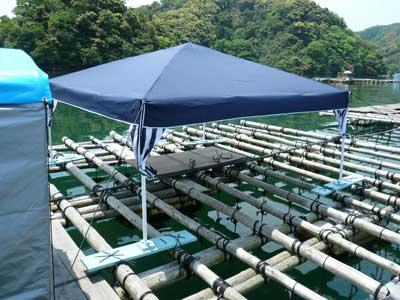 2009年5月10日(日)岩牡蠣の掃除や出荷に向けて日よけのタープを設営しました