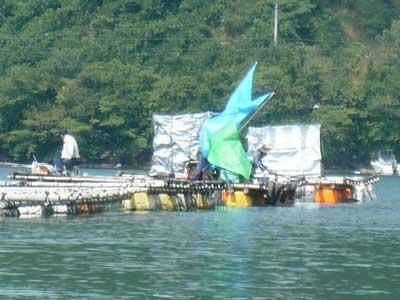 2009年6月27日(土)休憩時間に釣り客の様子を写真に撮りました