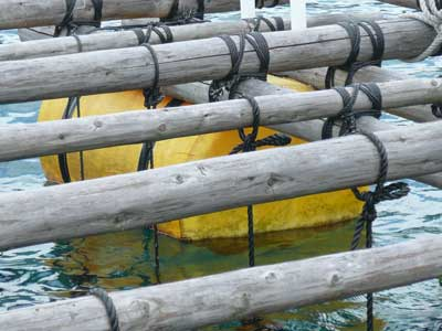 2009年7月19日(日)ビッシリ貝が付着していたフロートも綺麗になりました