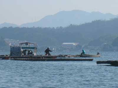 2010年1月17日(日)牡蠣の掃除されている横で釣りをされている様です