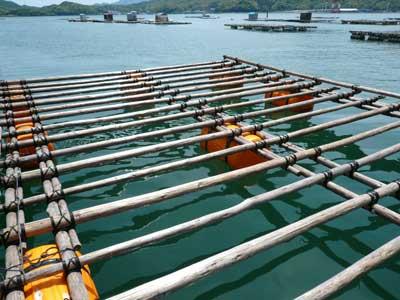 2010年5月15日(土)この筏は冬場に出荷する真牡蠣の養殖筏になります