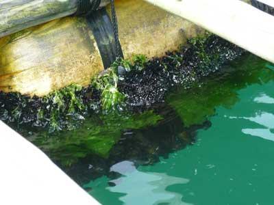 2010年7月18日(日)フロート全てにムラサキ貝が付着します