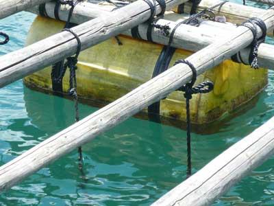 2010年7月18日(日)この筏で最後のフロート掃除となりました