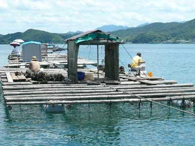 2010年7月18日(日)岩牡蠣の掃除をされています
