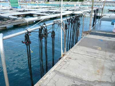 2010年9月6日(月)岩牡蠣の種は約1ケ月ほど海洋センターで養生させます