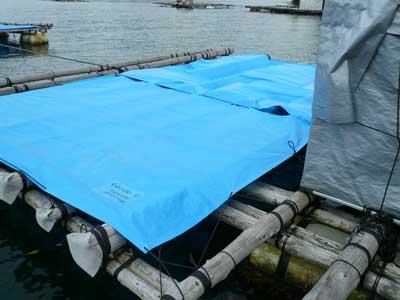 2010年10月29日(金)試験的に筏の上をブルーシートで覆い日よけを施して見ました