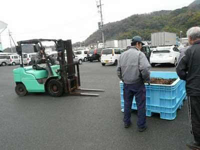 2011年3月1日(火)東舞鶴の田井漁協で育成した岩牡蠣の稚牡蠣も届きました