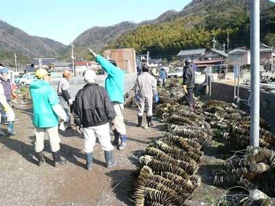 2011年3月19日(土)冬場に出荷しています真牡蠣の稚牡蠣もトラック一杯積まれて到着しました