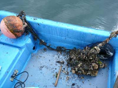 2011年4月30日(土)今回はフジツボが少なくゴミが多く付着していました